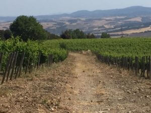 Montalcino and Montepulciano on our Tuscany Wine Tour