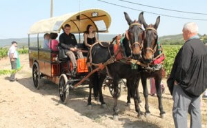 Tim-Syrad-Wine-Tours-Alternative-Transport