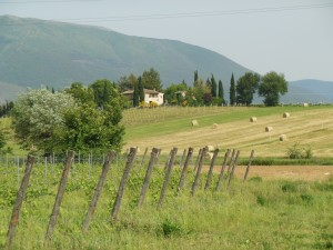 Umbria Wine Tour Vineyard at Raina