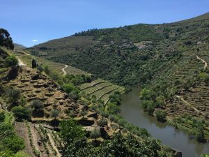 Portugal Wine Tour Douro Valley view