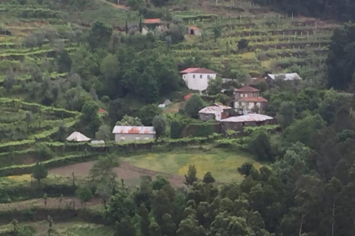 Portugal Wine Tour Quinta das Escomoeiras hillside