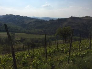Piedmont Wine Tour The view from Forteto della Luja in the Monferrato hills