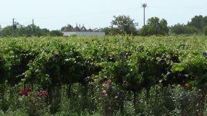 I Pastini vines and trulli