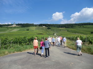 Leitz vineyards
