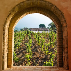 Sicily wine tour 2017