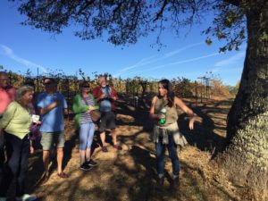 california-wine-tour-2-bacigalupi-vineyard-visit