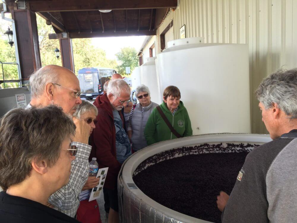 california-wine-tour-2-loxton-grapes