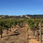 california-wine-tour-bacigalupi-chardonnay-vineyard