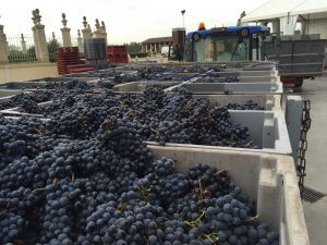 Bordeaux wine tour Ch Beychevelle harvest