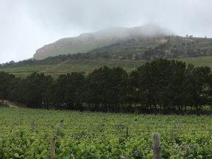South Africa Wine Tour Constantia Glen vineyards