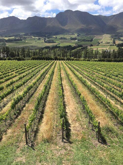 South Africa Wine Tour Hemel-en-Aarde