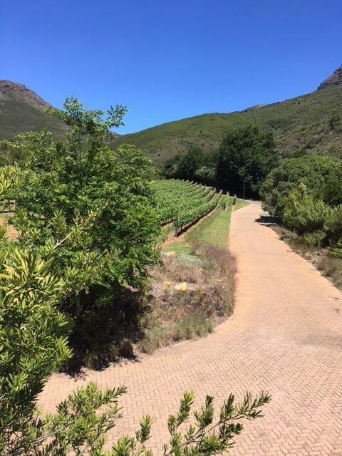 South Africa Wine Tour Keermont vineyard