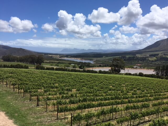 South Africa Wine Tour Newton Johnson vineyards