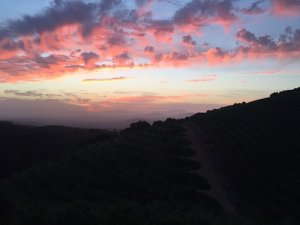 South Africa Wine Tour Tokara Restaurant sunset