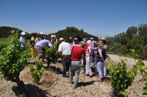 Rhone Valley Tour Domaine de Morchon vineyard visit