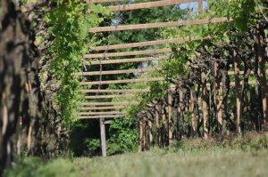 Verona Wine Tour Giovanna Tantini