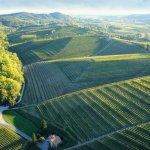 Friuli Venezia Vento Wine Tour Colli Orientale