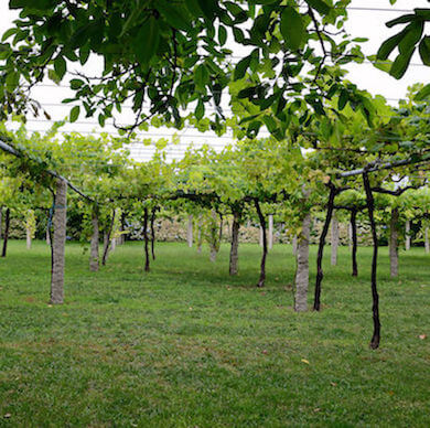 Galicia Wine Tour Rias Baixas