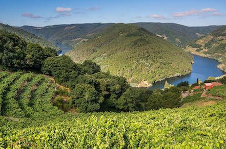 Galicia Wine Tour Rio Minho