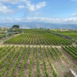 Quinta do Portal vineyard